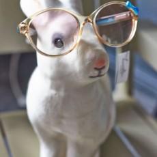Lunettes Selection - Le vintage dans vos lunettes