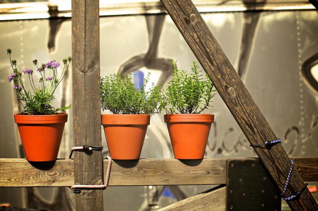 Une boutique de jardinage en ligne etagen erika vivre for Boutique jardinage en ligne