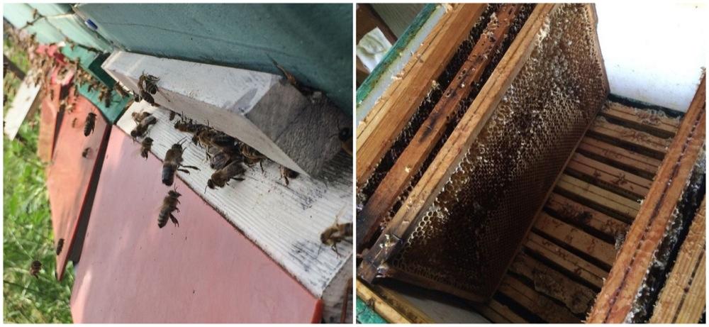 abeilles-berlin